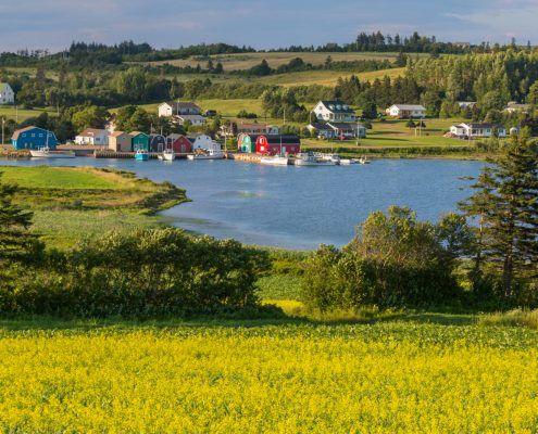 Canada Prince Edouard Island oysters